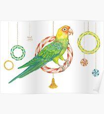 Candy Carolina Parakeet Poster