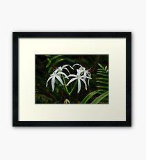 Swamp Lily Framed Print