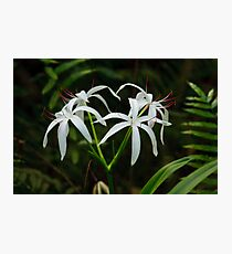 Swamp Lily Photographic Print