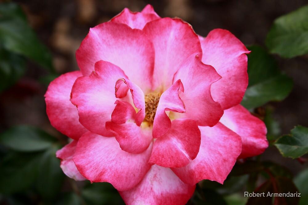 Rainbow Sorbet Floribunda Rose by Robert Armendariz