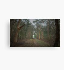 Walk in the Woods (16x9) Canvas Print