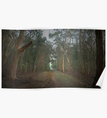 Walk in the Woods (16x9) Poster