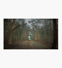 Walk in the Woods (16x9) Photographic Print