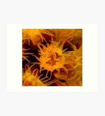 Orange Cup Coral Art Print
