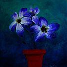 Midnight Blue by BenPotter