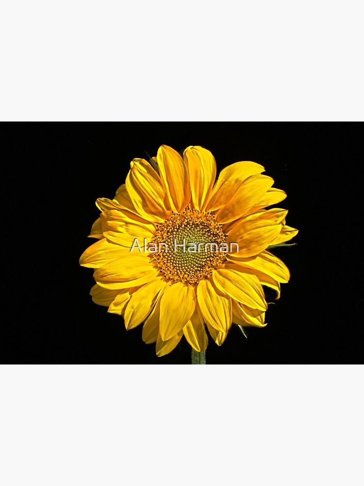 Sunflower by AlanHarman