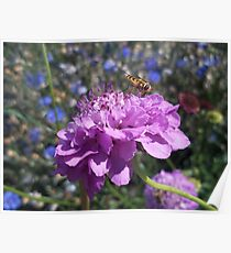 Insect on flower Poster