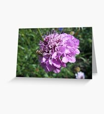 Insect on flower 2 Greeting Card