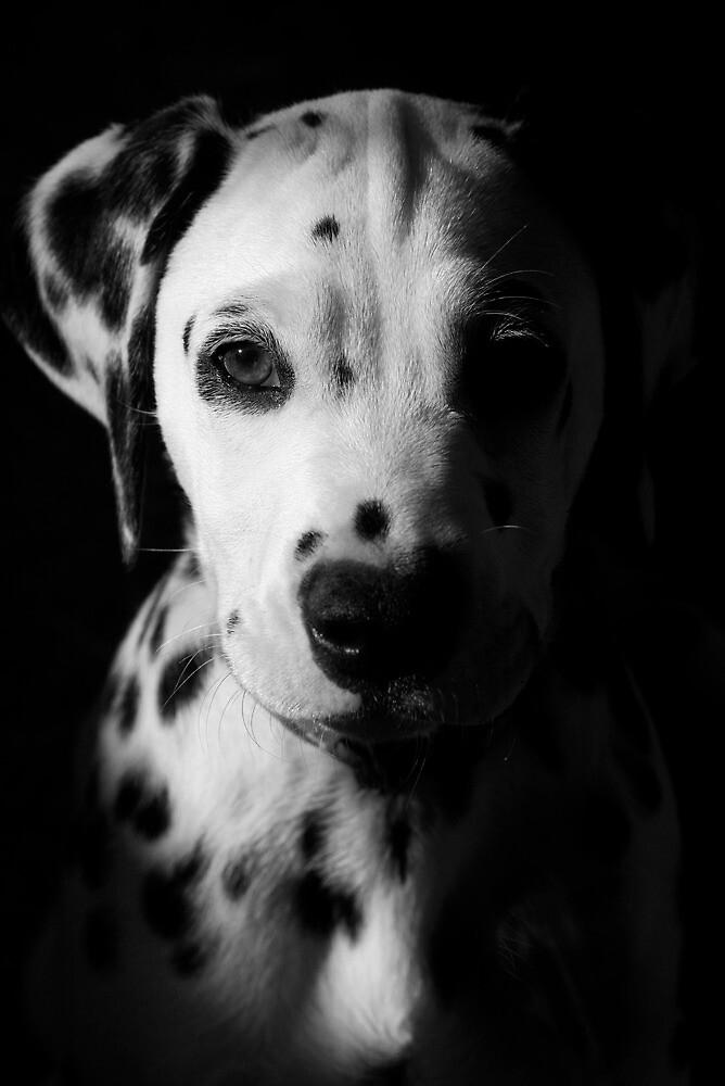 Portrait of a Lady by Rhana Griffin