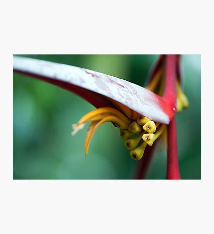 Natures Design Photographic Print