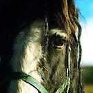 Horse Portrait by MariaVikerkaar
