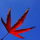 vermillion leaf by Karen E Camilleri