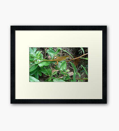 August Anole Framed Print