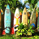 retired surfboards by Marda Bebb