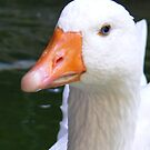 ol' blue eyes - sacred goose, barcelona by monkeyferret