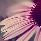 Purple Rays by ameliakayphotog