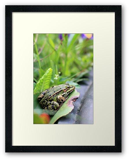 Frogger by Alexander Kok
