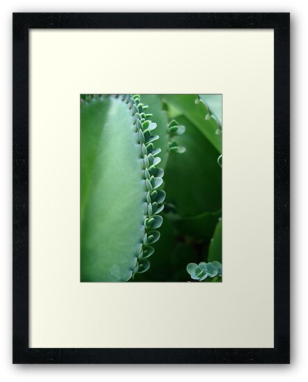Butterfly Succulent by May Lattanzio