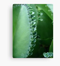 Butterfly Succulent Canvas Print