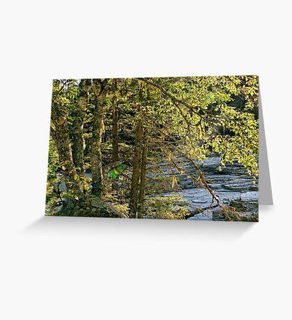 Glacier Autumn - MacDonald Creek Greeting Card