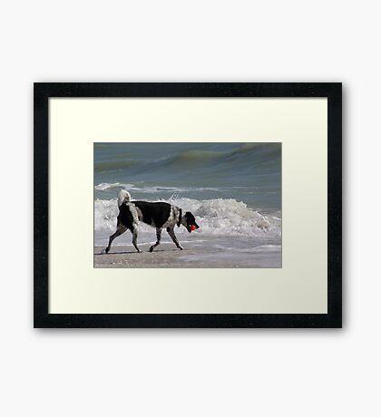 Walkin' the Beach Framed Print