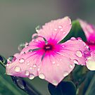 Morning Dew by Siddhesh Rishi