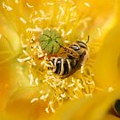 A Wasp Bathes In Yellow Pollen by DARRIN ALDRIDGE