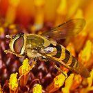 Vibrant Hoverfly by Gareth Jones