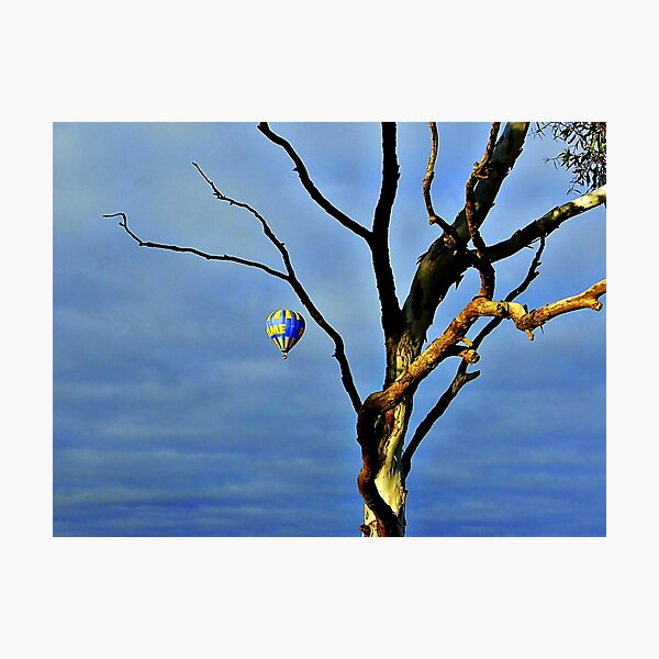 Barely A Tree Photographic Print