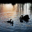 Evening on the Campaspe by Meg Hart