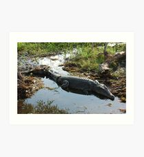 Sunning Saltwater Crocodile Art Print