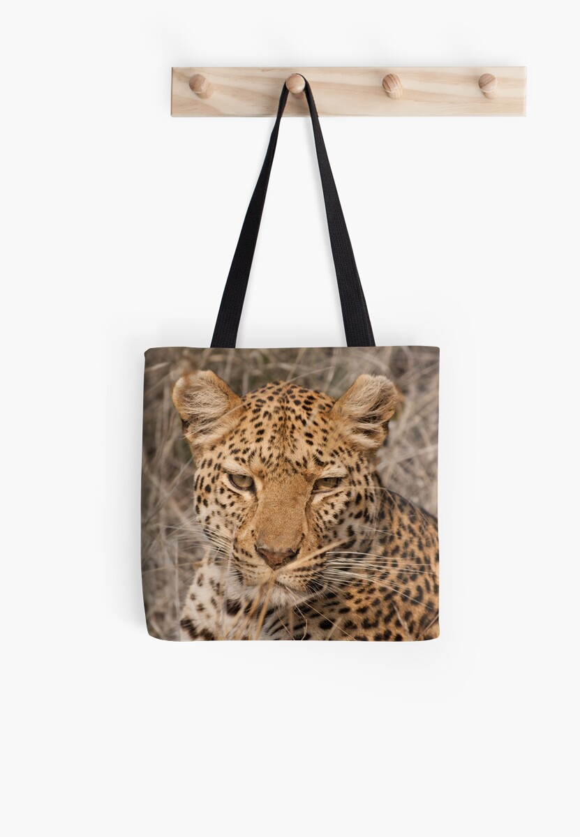 Leopard in your face by fitch