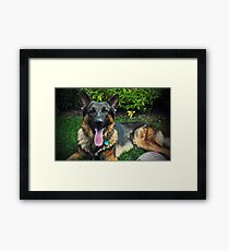 Chewbacca the German Shepherd Framed Print