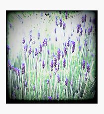 Lavender's Blue Dilly Dilly Photographic Print