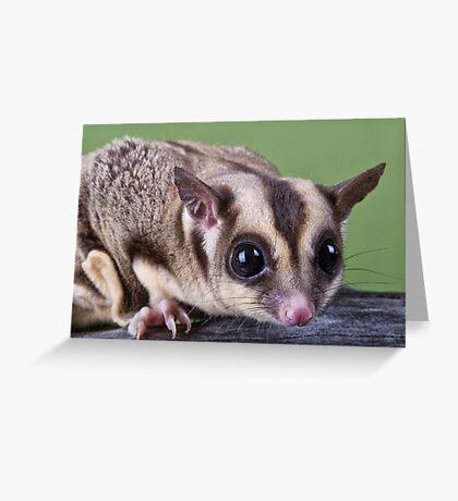 Sugar Glider Greeting Card