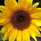 Yellow by derekwallace