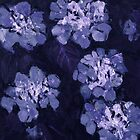 Nature - Hydrangea in Blue (Edit Version) by SedasNature