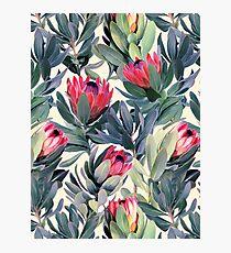 Gemaltes Protea-Muster Fotodruck