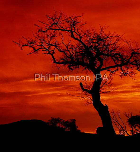 """""""Silhouettes at Sunrise"""" by Phil Thomson IPA"""