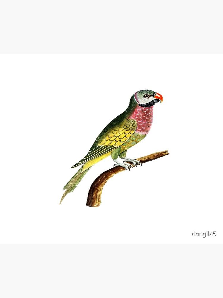 bird by dongila5