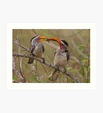 Hornbill Love Art Print