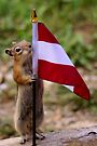 Jasper's Young Intern With The Flag of Austria by Betsy  Seeton