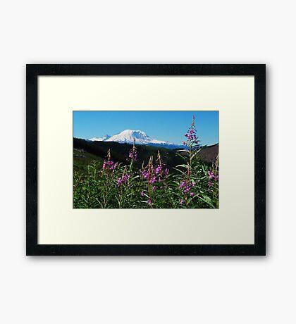 Summer at Mt. Rainier Framed Print