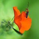 A Bugs Life by BluAlien