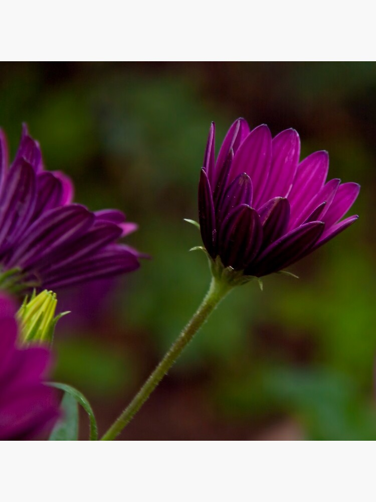 Purple bokeh  by rapis60