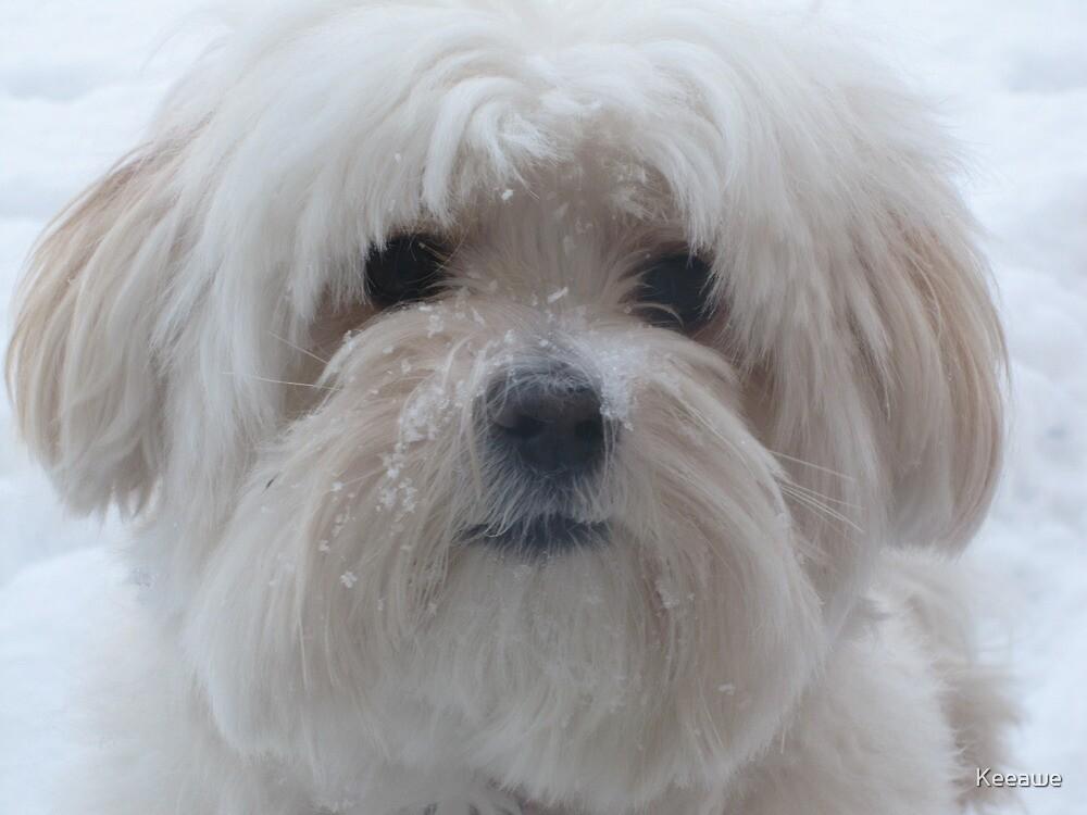Winter Lola by Keeawe