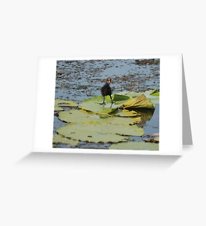 Cute Coot Greeting Card