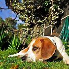 A Dog's Eye View by Helen Vercoe