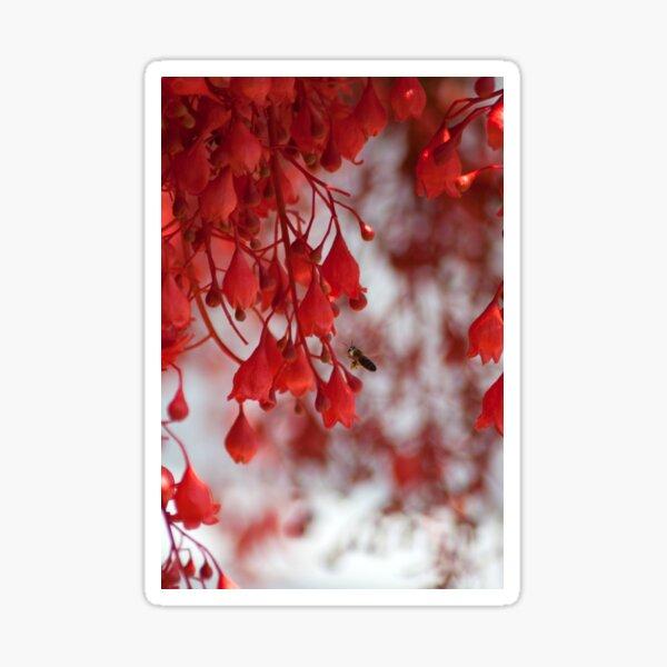 Illawarra Flame Tree flowers Sticker