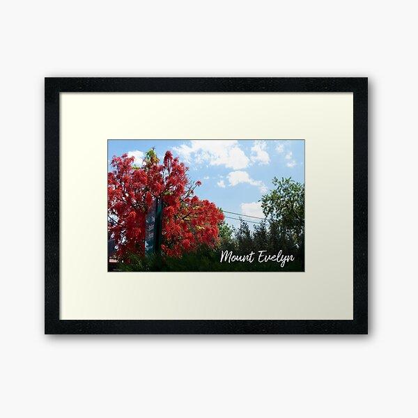 Mount Evelyn Illawarra Flame Tree Framed Art Print